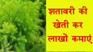 Start Shatavar (Asparagus) Farming and Earn Good Profit. || Shatavari Farming thumbnail