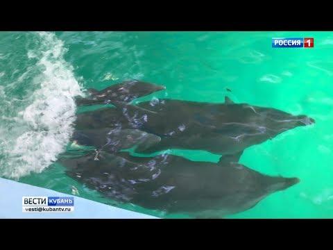 В Лазаревском дельфинарии родились два дельфиненка