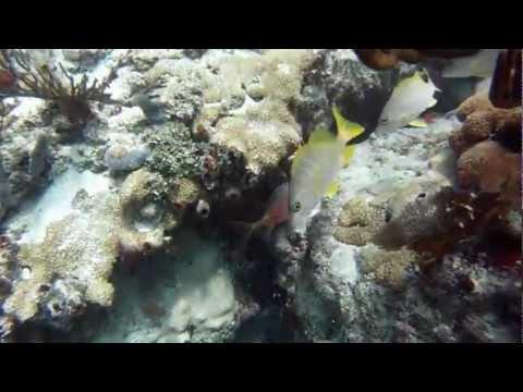 Diving Sombrero Reef 7-4-2012