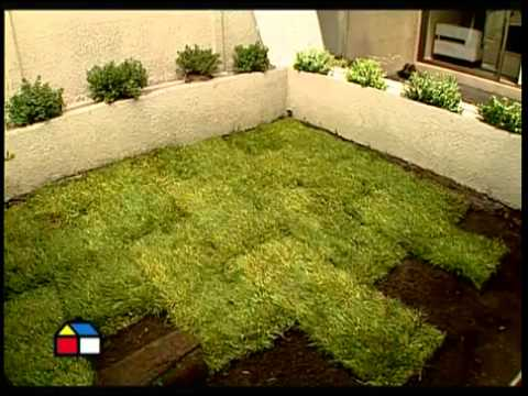 Como poner pasto en rollo youtube - Plantar cesped natural ...