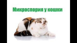 Микроспория  У Кошки & Что Такое Микроспория У Кошек. Ветклиника Био-Вет