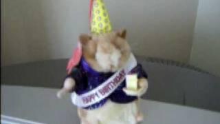 Dancing Hamster - Special Birthday Edition - Happy Birthday