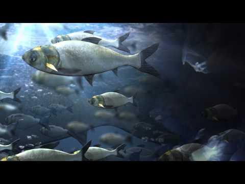 Louisiana Paper Mill Responsible For Fish Kill