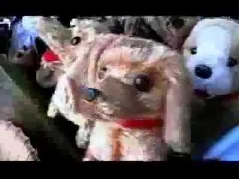 sparklehorse-king-of-nails-official-video-sparklehorsevideos