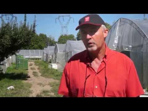 Plus de 50 ans d'agriculture biologique