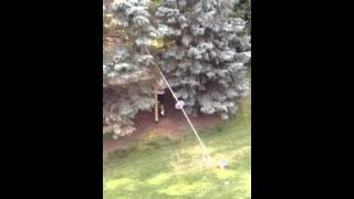 World's Tallest Bird Feeder Pole
