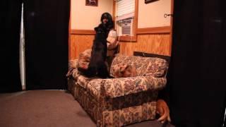 Zed Bite Work- Protection Trained German Shepherd Plus Random Cat