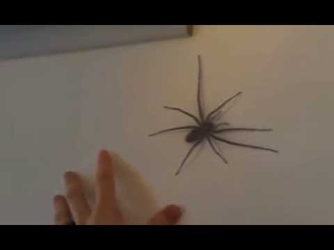 Giant Spider On My Wall Youtube