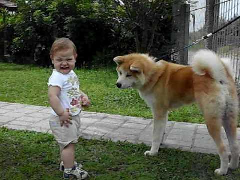 Uma bebê tratando de um Akita Inu - YouTube