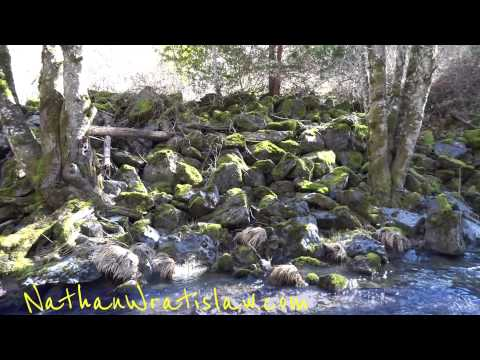 CA 101 Redwood Forest Highway National Parks Road Trip Video Tips Walk Around Northern California