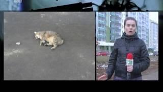Камера наблюдения сняла как живодер выкинул коше из окна
