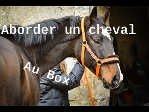 Tutoriel: Aborder un cheval au box