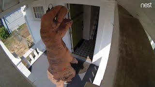 See the Silliest Home Videos Recorded on Nest Cam