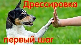 Дрессировка собак первое вводное занятие по ОКД