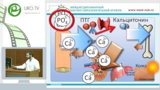 Галиев Н - Механизмы образования камней из оксалатов и фосфатов кальция