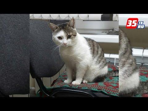 Кота Васю с автовокзала ищут в Череповце