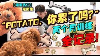堅持兩個月對Potato說你累了嗎?你覺得他會躺下嗎?訓練全記錄!【波爹多仁04】