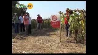 Висококачествена генетика при царевицата и слънчогледа в цялата страна