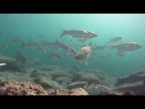Müjdat TURAN Levrek avları 4. bölüm  XTC 300 HD