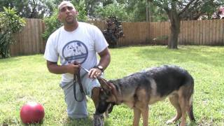 Dog Training Tips : Easy-to-train Dog Breeds