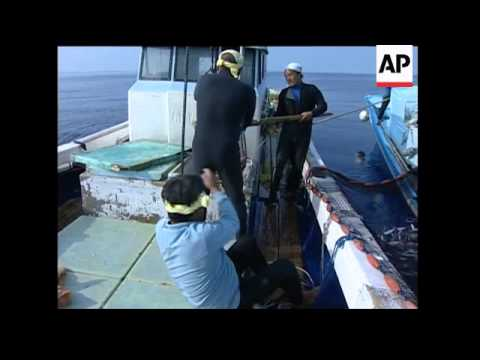 An Aging Workforce Threatens Japan's Fishing Industry