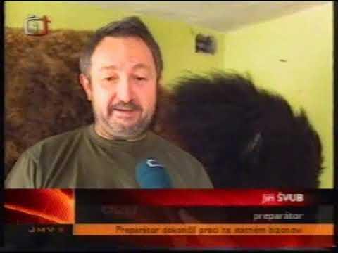 Bizon - reportáž ČT