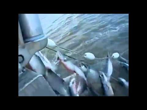 Песни о рыбалке, рыбаках и рыбках – Рыбалка