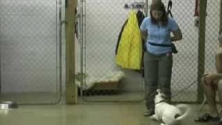 Wilmington Delaware Dog Trainer