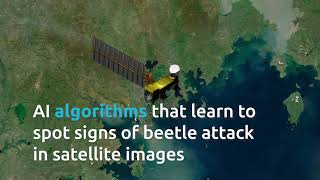 AI Bark beetle