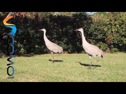 Aves bonitas y divertidas - Cute birds