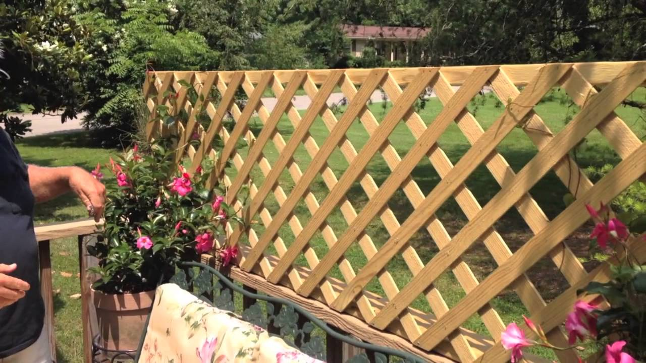 Build A Quick And Easy Trellis For Your Deck Youtube