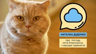 Наталка Діденко: Кіт Апельмон про погоду знає більше за народні прикмети!