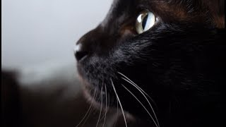 """Корм для животных: из чего сделан """"ягнёнок"""" для вашей кошечки?"""