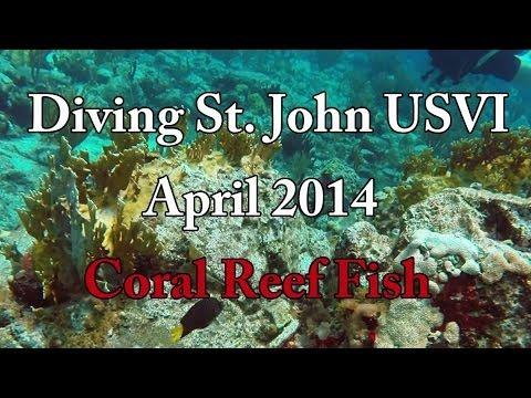 Diving St. John USVI - Coral Reef Fish - 1080p HD