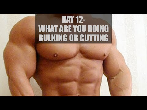Day 12 - bulking or cutting crap