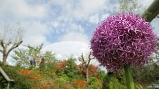 10 tips for gardeners in June from the Eden Project
