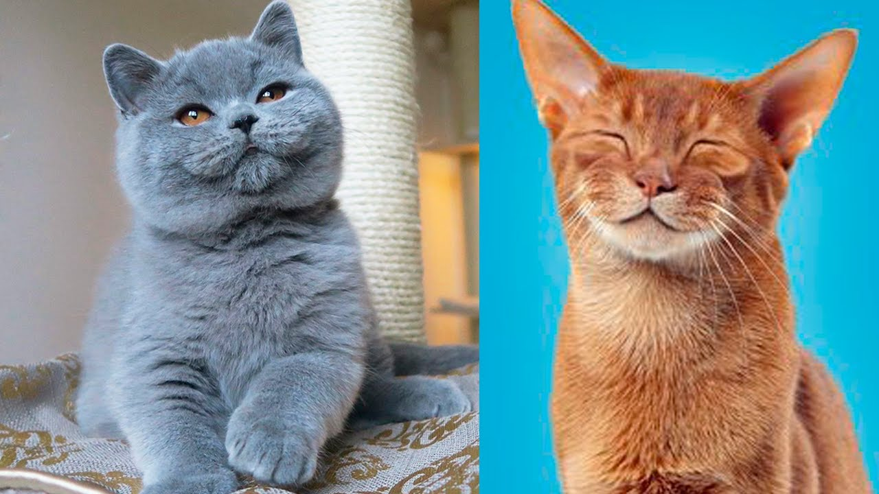 The Cutest Cat Breeds In The World Youtube