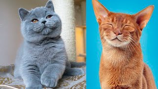The CUTEST CAT BREEDS In The World