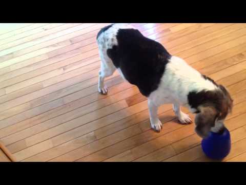 Nina Ottosson Dog Pyramid Product Review, video 2