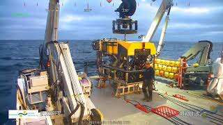 ROV Dive 445 - Little Joe Seamount