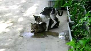 cat style sex!..part 2