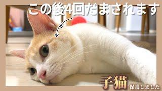 【悲報】何度騙されても懲りずにまた騙されちゃう純粋な猫