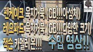 CB 팬케이크 육지거북 그리고 CB레오파드 육지거북이 …