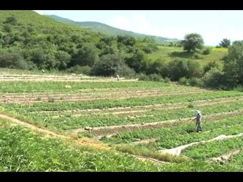 A New Water Canal Boosts Agriculture and Economy in Tavush