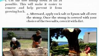 How to Cheaply Remove a Tree Stump