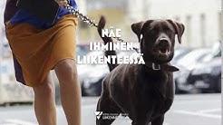 Näe koiran ulkoiluttaja - ihminen - liikenteessä