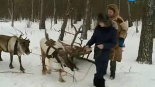 Северные Олени в мире животных