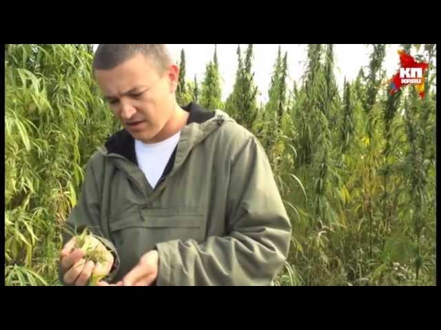 Конопля в уфе семена конопли доставка по москве