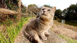 気分屋のぽっちゃり灰色猫が柵の向こう側から出てきてくれない・・・