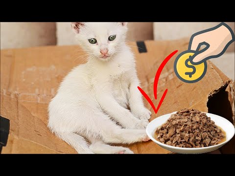 Stray Cats Eating Wet Cat Food  (Cute Cats - Cute Kittens)